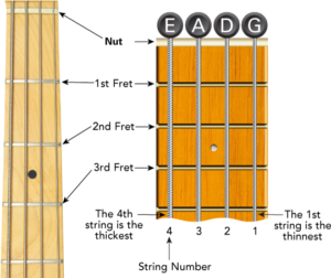 69164-012-bv01-en-us1-300x252 What is a fretless bass guitar?